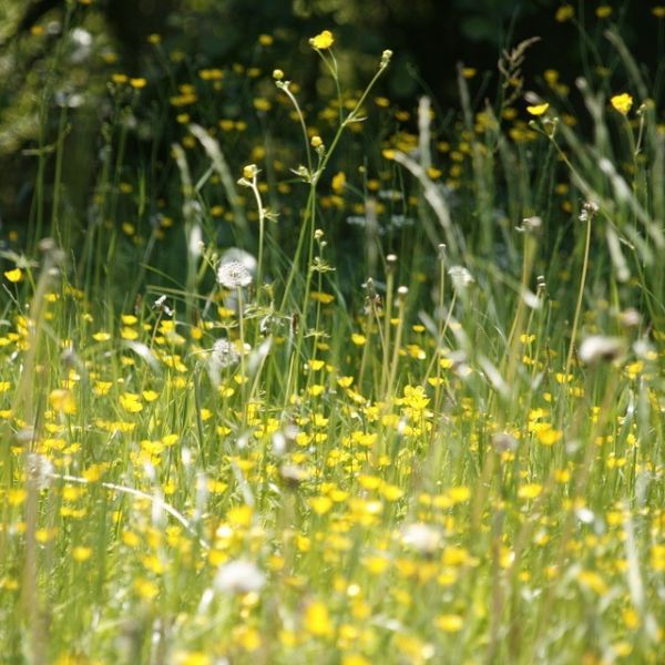 img 600x600 - Hay Fever Drugs are making Driving Illegal