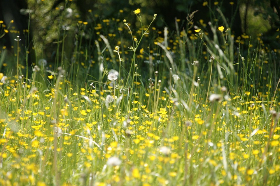 img - Hay Fever Drugs are making Driving Illegal